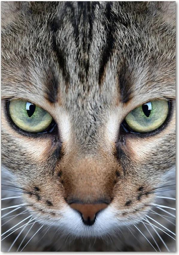 Tablou pe acril Ochi de pisica