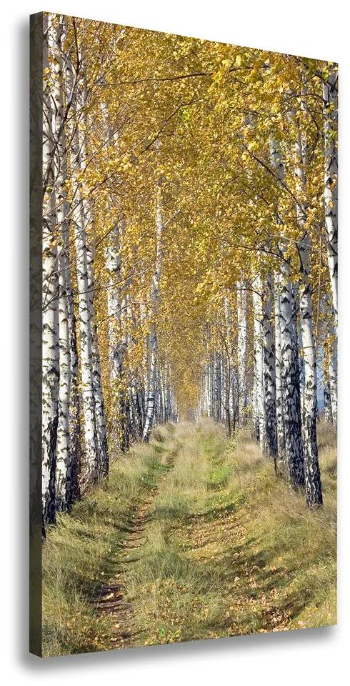 Tablou canvas Pădurea de mesteacăn