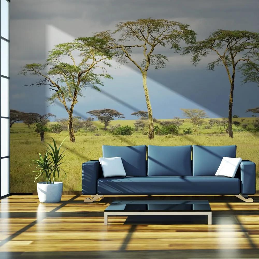 Fototapet - Savanna trees