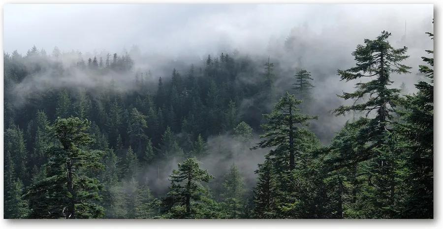 Tablou pe pe sticlă Ceață pădure