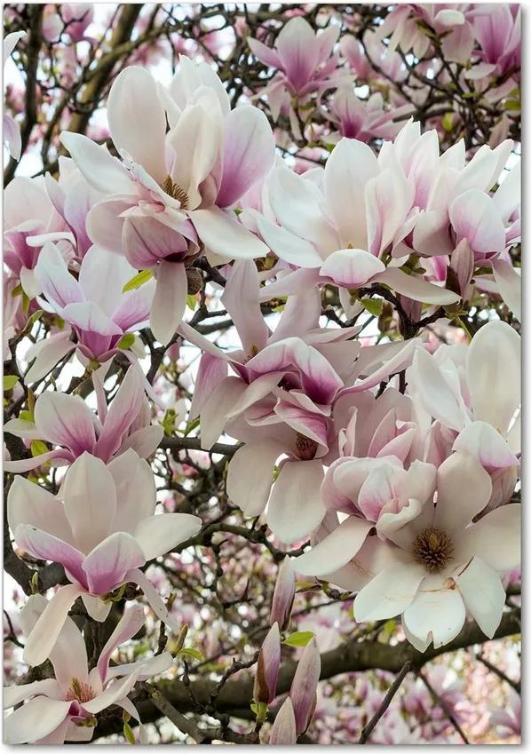 Tablou acrilic Flori magnolia