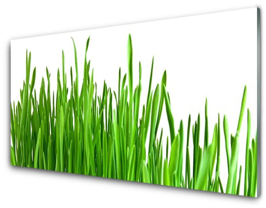 Tablou pe sticla acrilica Iarbă verde florale