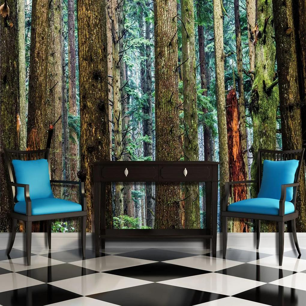 Fototapet - Pădure (254x184 cm), în 8 de alte dimensiuni noi