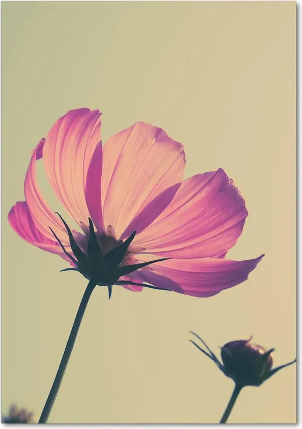 Tablou pe acril Flori roz