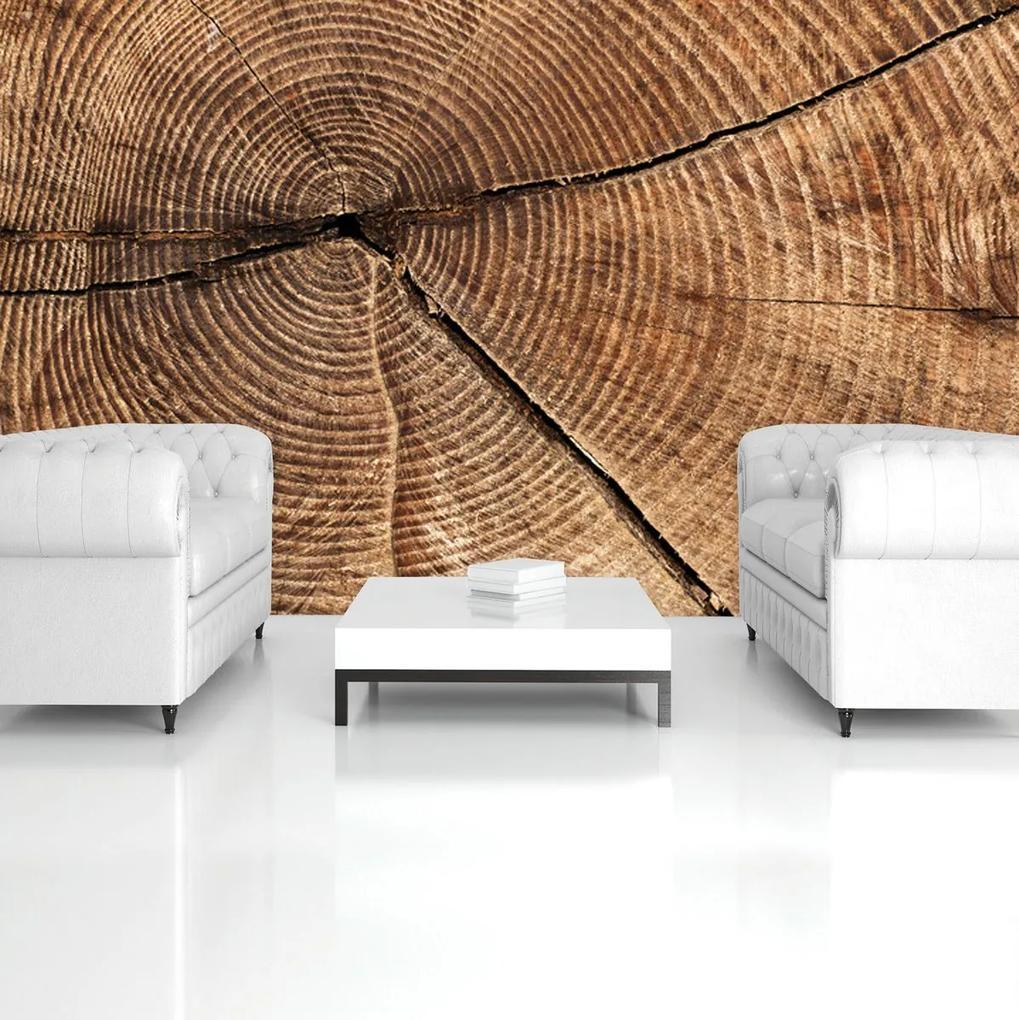 Fototapet - Secțiunea prin trunchiul de copac (152,5x104 cm), în 8 de alte dimensiuni noi