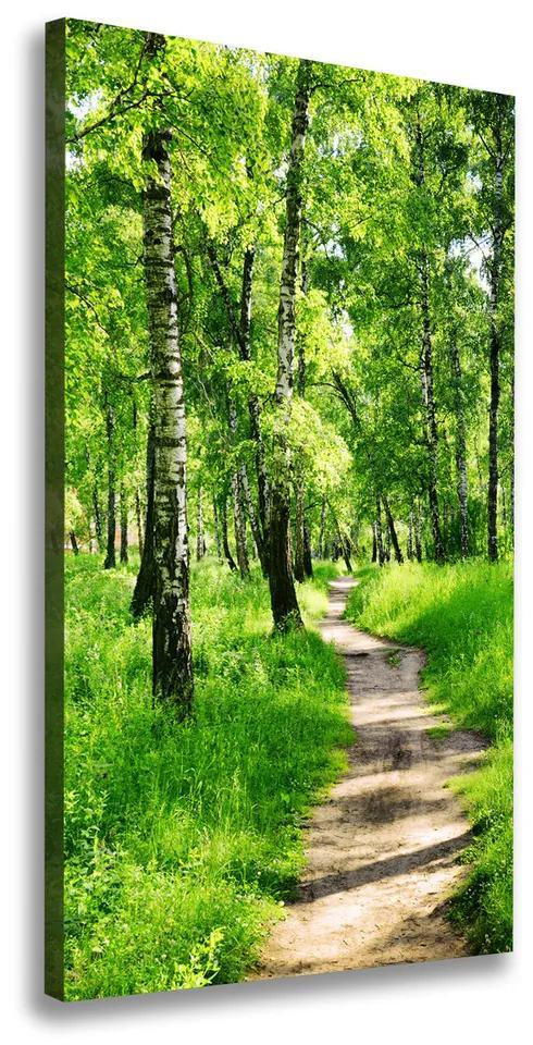 Imprimare tablou canvas Pădurea de mesteacăn