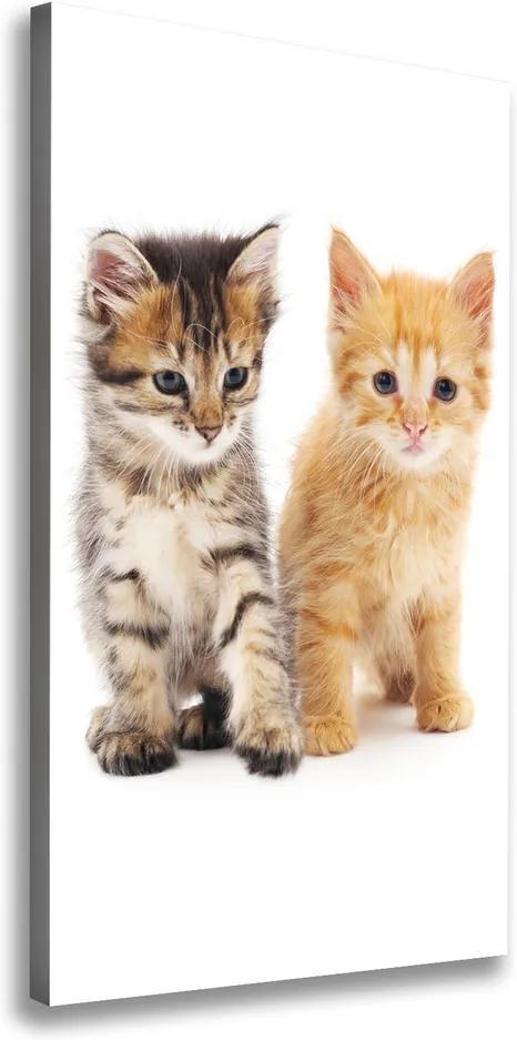 Tablouri tipărite pe pânză Gri și roșu pisică