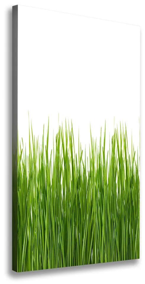 Imprimare tablou canvas Iarbă verde