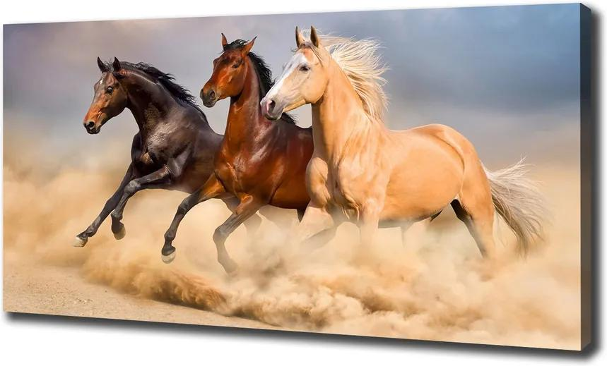 Tablou pe pânză canvas Galopantă cai