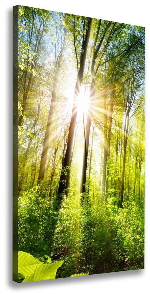 Imprimare tablou canvas Soare în pădure