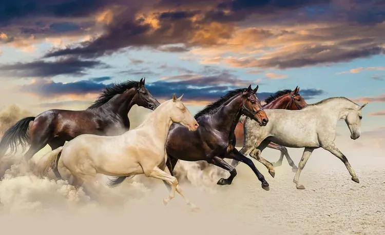 Horses Fototapet, (104 x 70.5 cm)