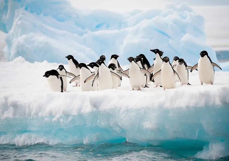 Penguins Fototapet, (104 x 70.5 cm)
