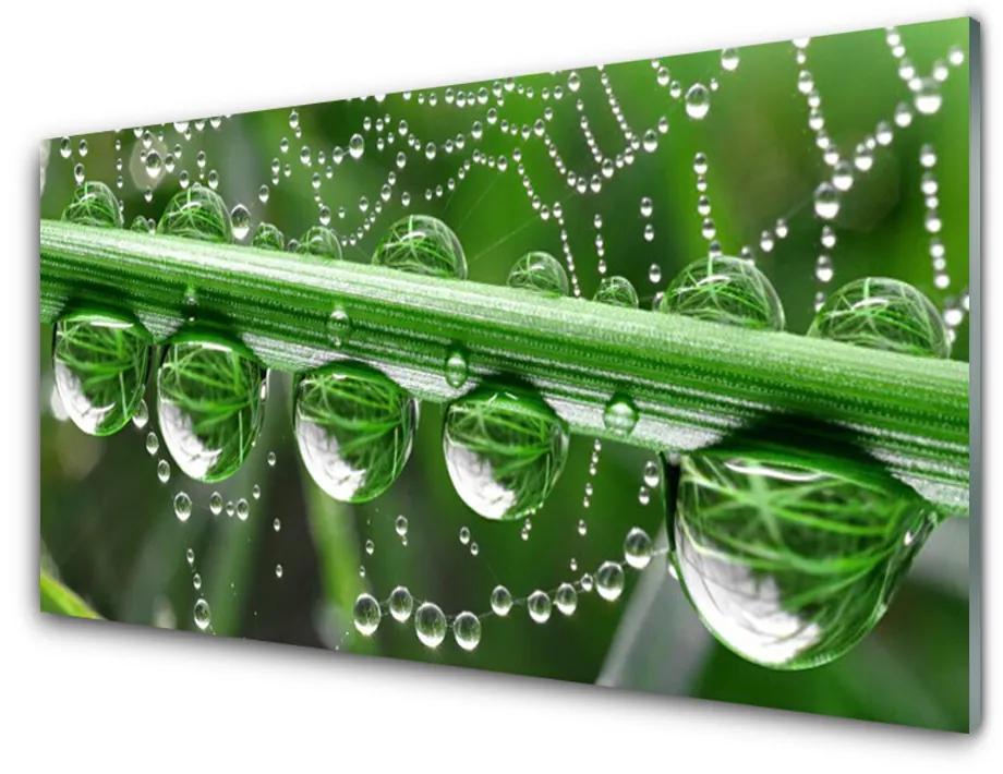 Tablou pe sticla acrilica Spider Web Dewdrops Floral alb