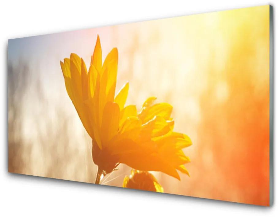 Tablou pe sticla acrilica Floarea soarelui Floral Galben
