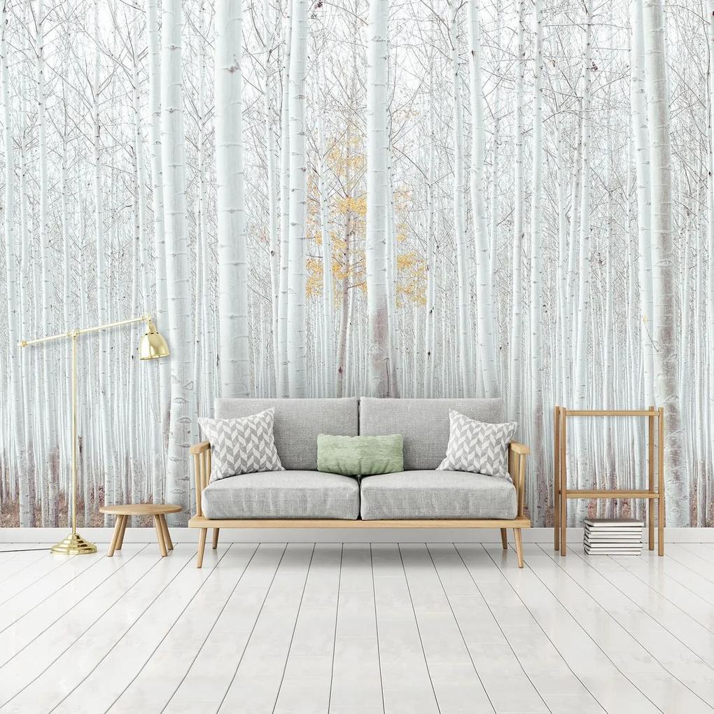 Fototapet - Pădure - albă (152,5x104 cm), în 8 de alte dimensiuni noi
