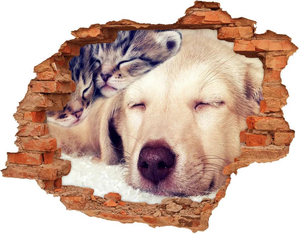 Fototapet un zid spart cu priveliște Puppy și pisici