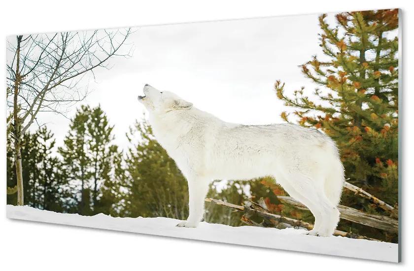 Tablouri acrilice Tablouri acrilice pădure de iarnă Wolf