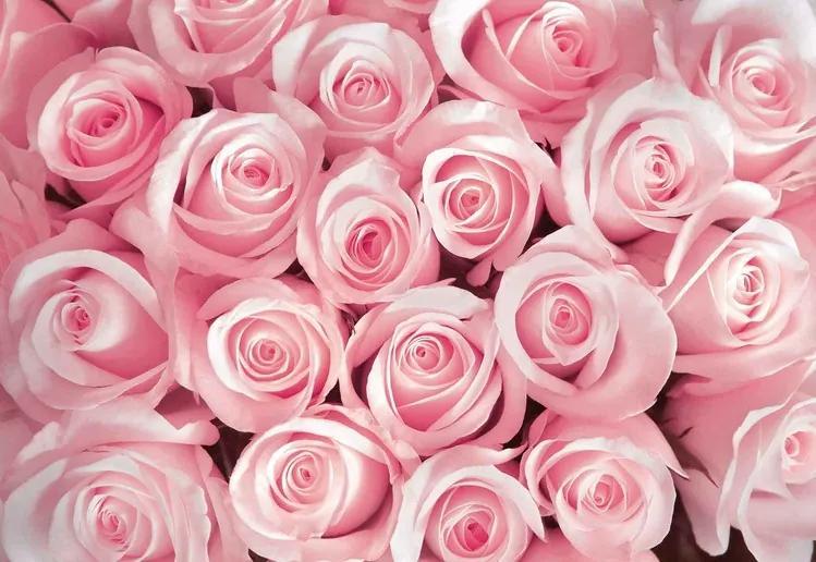Flowers Roses Fototapet, (368 x 254 cm)