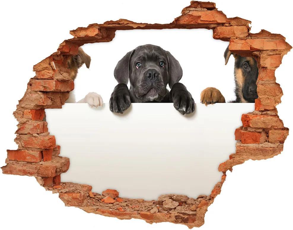 Autocolant un zid spart cu priveliște Trei pui