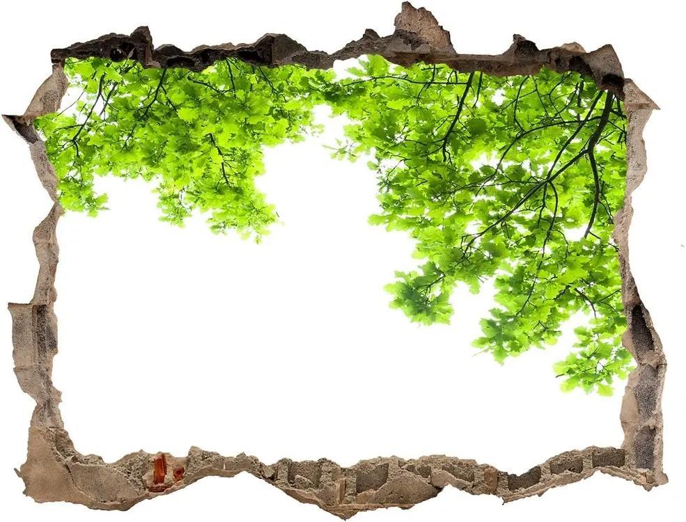 Autocolant 3D gaura cu priveliște Frunze de stejar