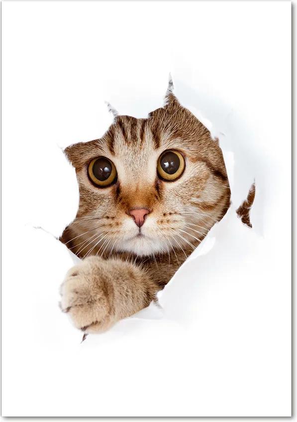 Pictura pe sticlă acrilică Pisică
