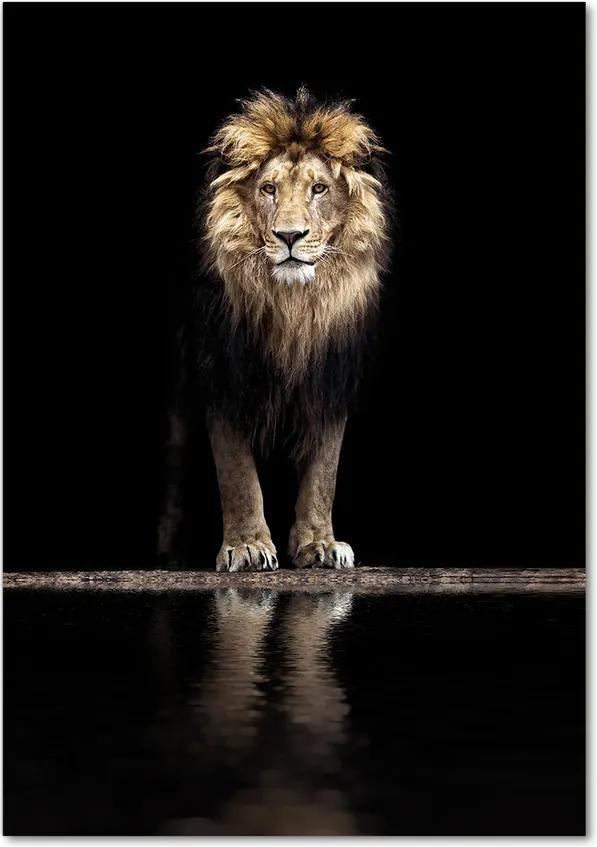 Tablou pe acril Portret de un leu