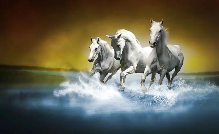 Horses Fototapet, (211 x 90 cm)