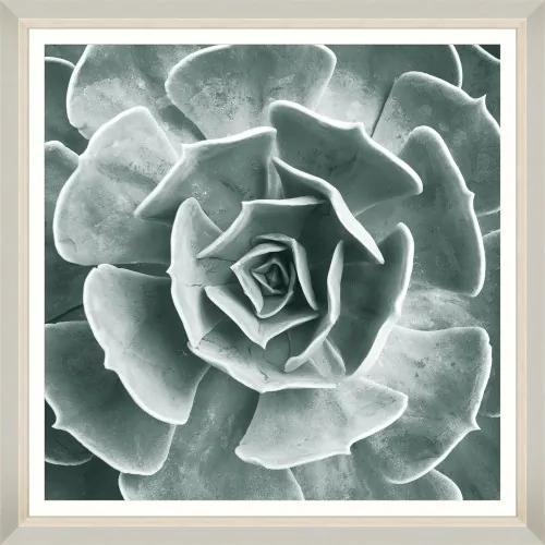 Tablou Framed Art Succulent IV