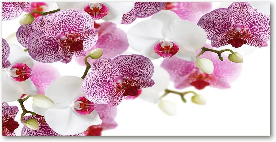 Imagine de sticlă Orhidee