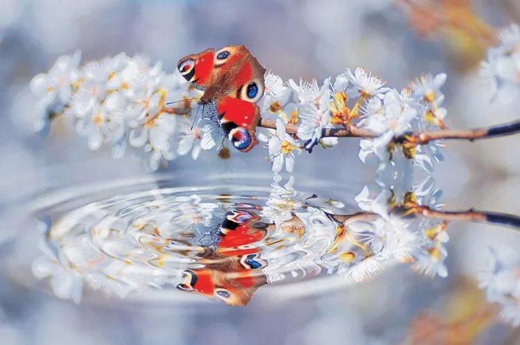 Butterfly Flower Scene Fototapet, (312 x 219 cm)