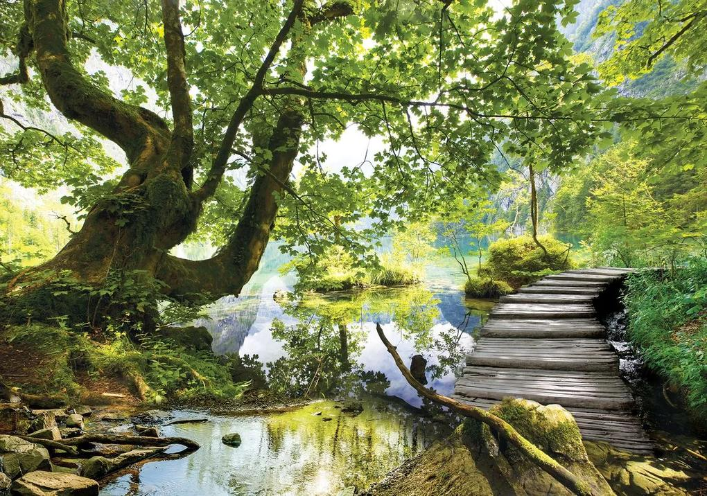 Fototapet - În pădure (254x184 cm), în 8 de alte dimensiuni noi
