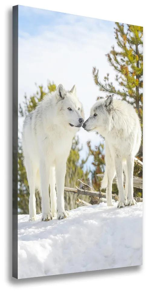 Imprimare tablou canvas Doi lupi albi