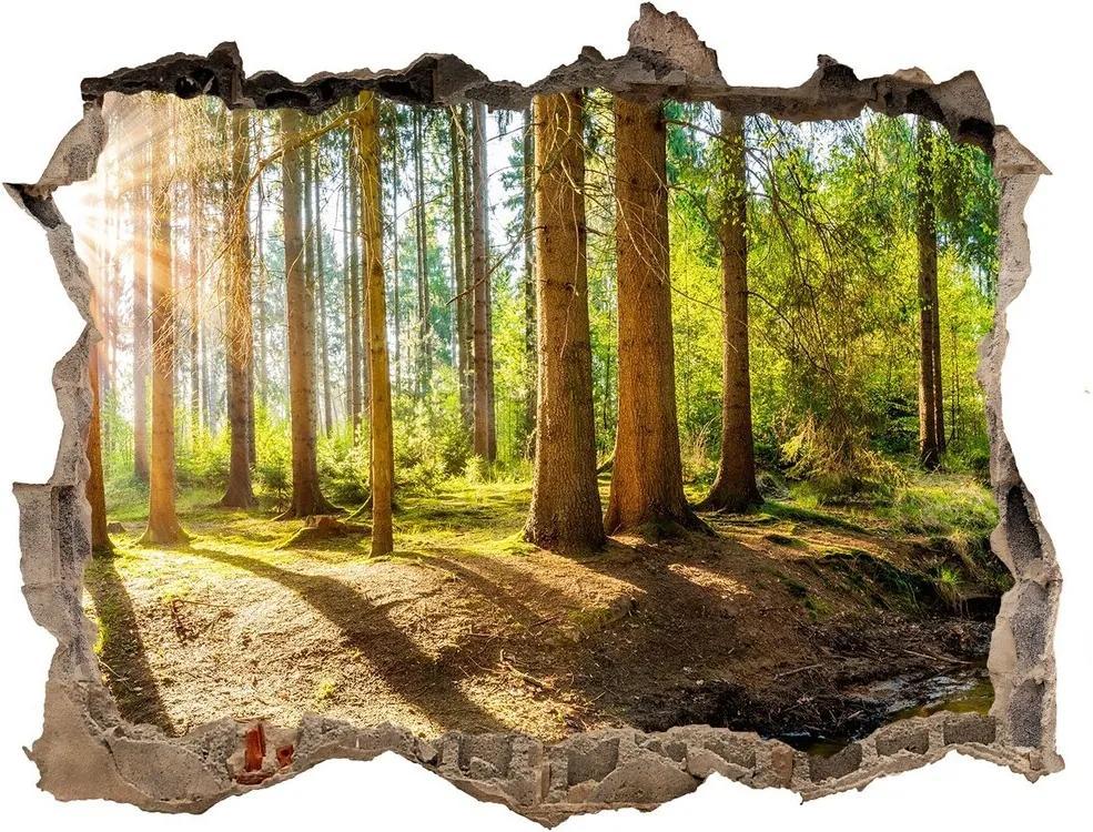 Fototapet 3D gaură în perete Panorama de pădure