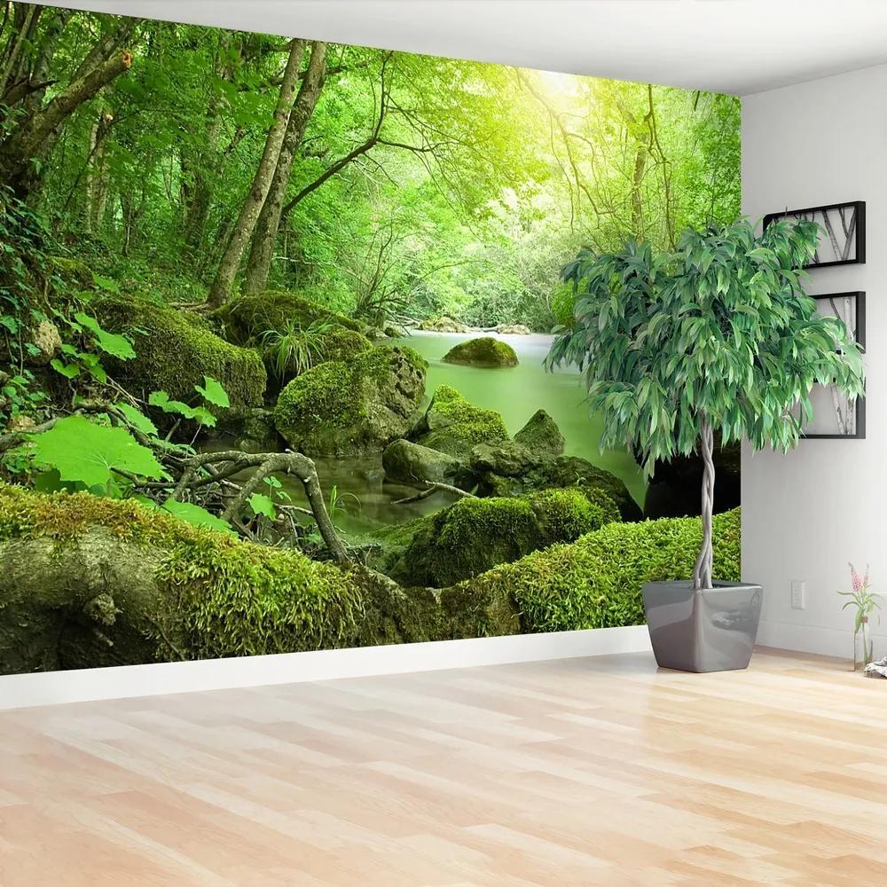 Fototapet River Forest