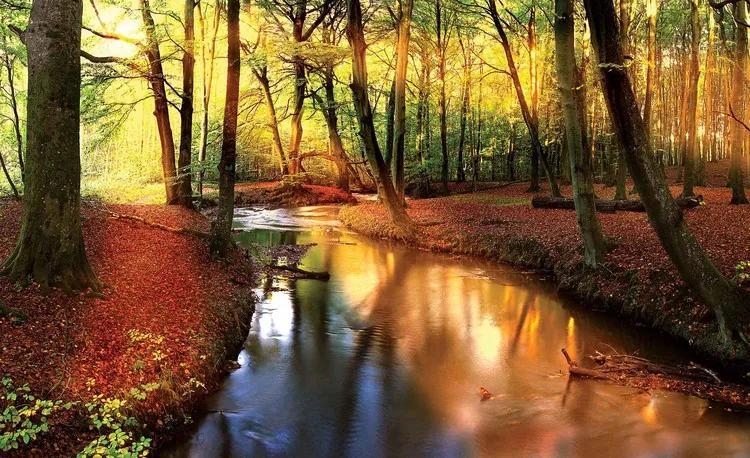 Forest River Beam Light Nature Fototapet, (104 x 70.5 cm)