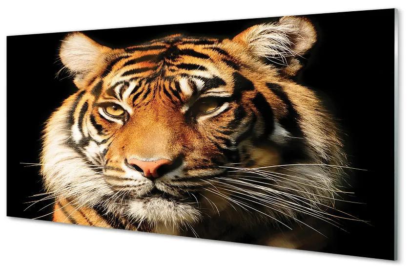 Tablouri acrilice Tablouri acrilice Tigru