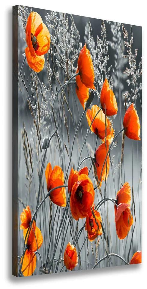 Pictură pe pânză Wildflowers maci