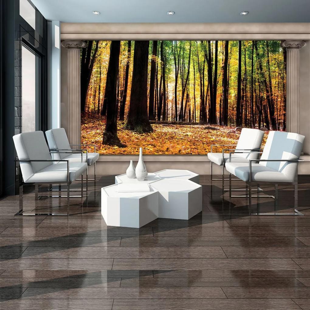 Fototapet - Pădure de toamnă (152,5x104 cm), în 8 de alte dimensiuni noi