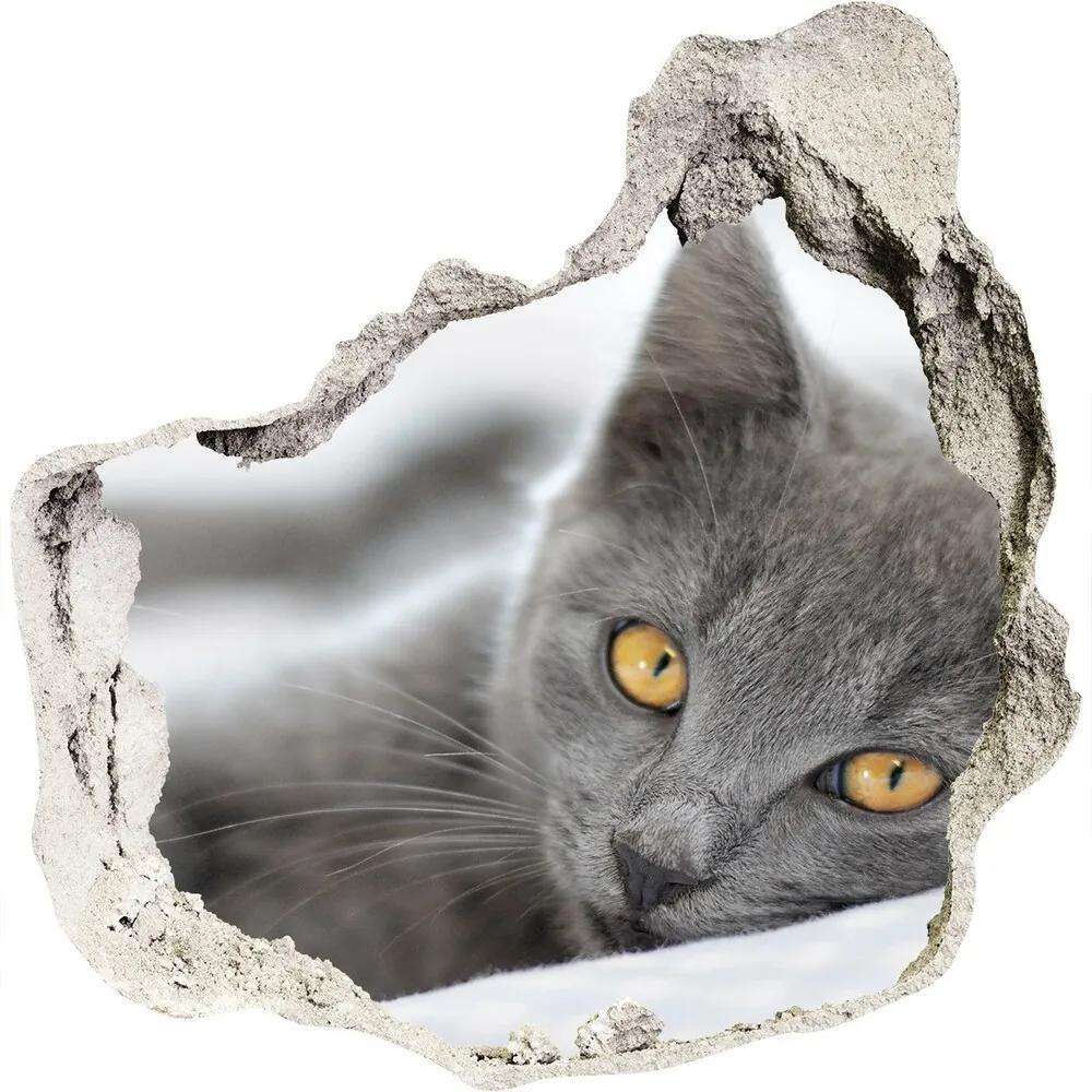 Fototapet un zid spart cu priveliște Pisică gri