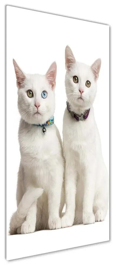 Tablou pe sticlă acrilică Două pisici albe