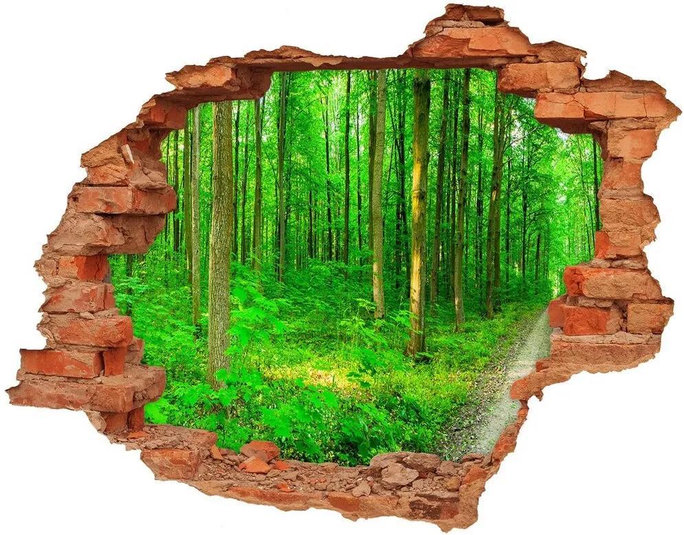 Autocolant autoadeziv gaură Copaci în pădure