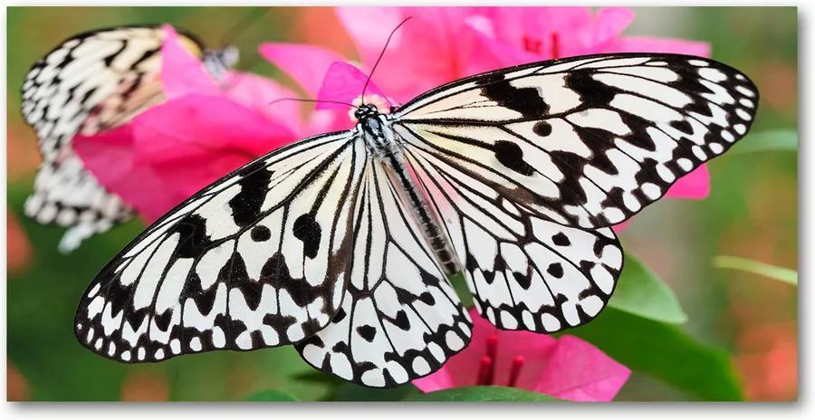 Tablou pe sticlă acrilică Fluture pe o floare