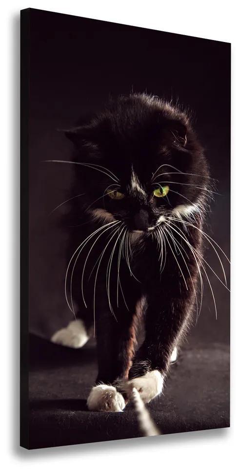 Tablouri tipărite pe pânză Pisica neagra