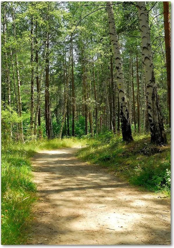 Tablou pe acril Pădurea de mesteacăn
