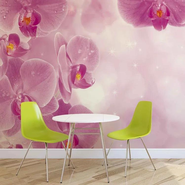 Flowers Orchids Fototapet, (416 x 254 cm)