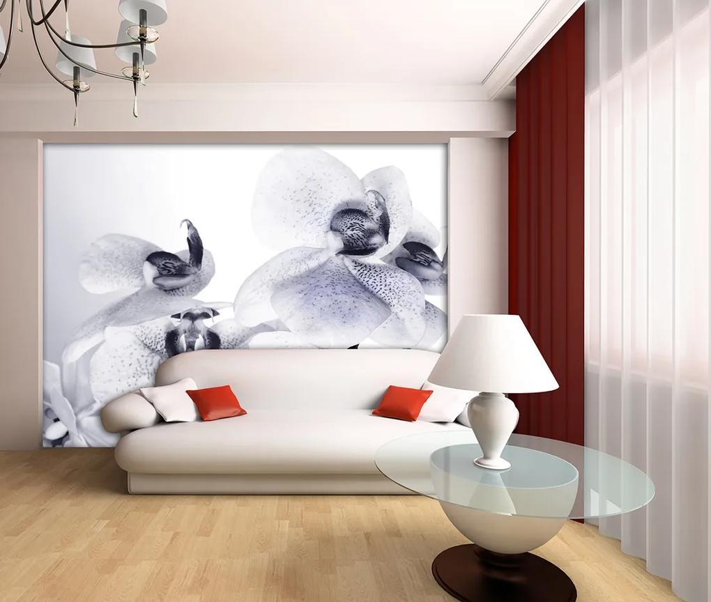 Fototapet Orhidee -  360x254 cm