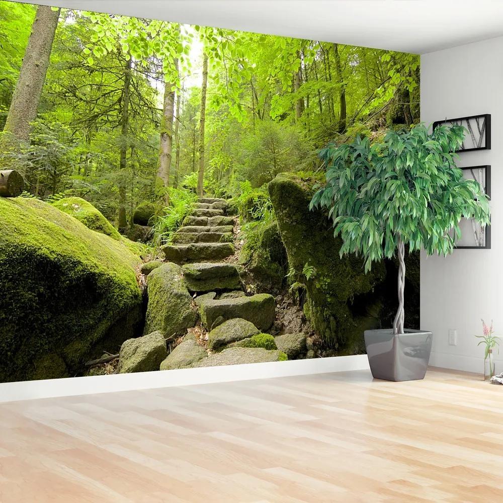 Fototapet Forest Trail
