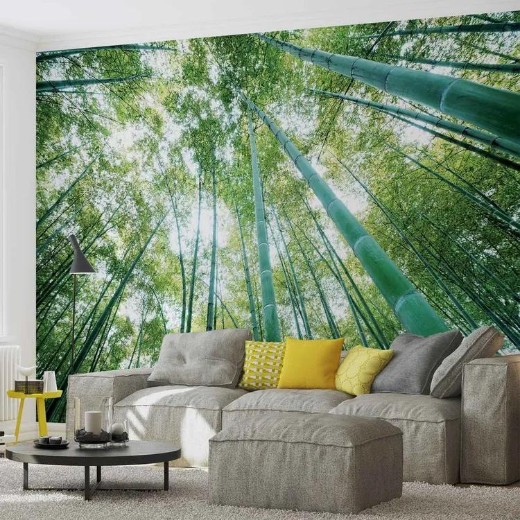 Forest Woods Fototapet, (206 x 275 cm)