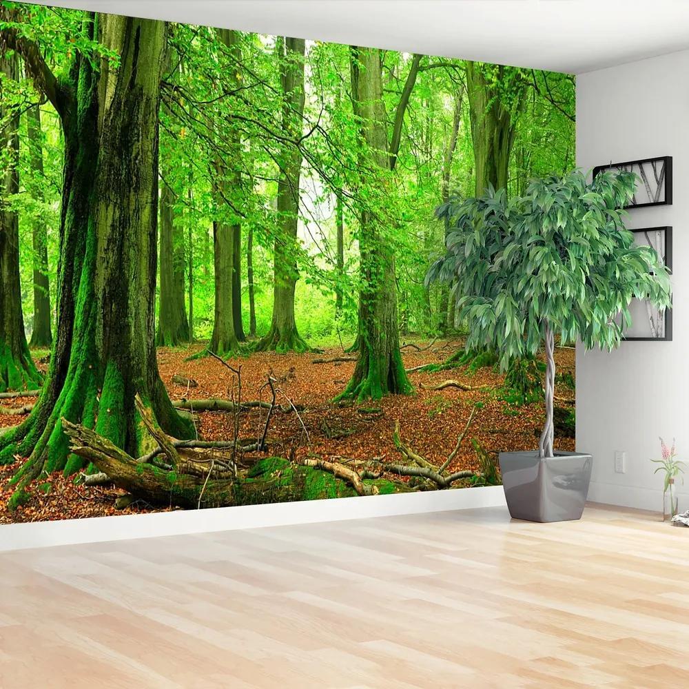 Fototapet pădure