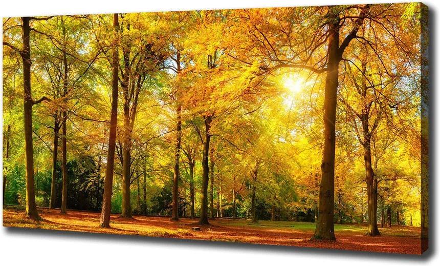 Imprimare tablou canvas Pădure în toamna